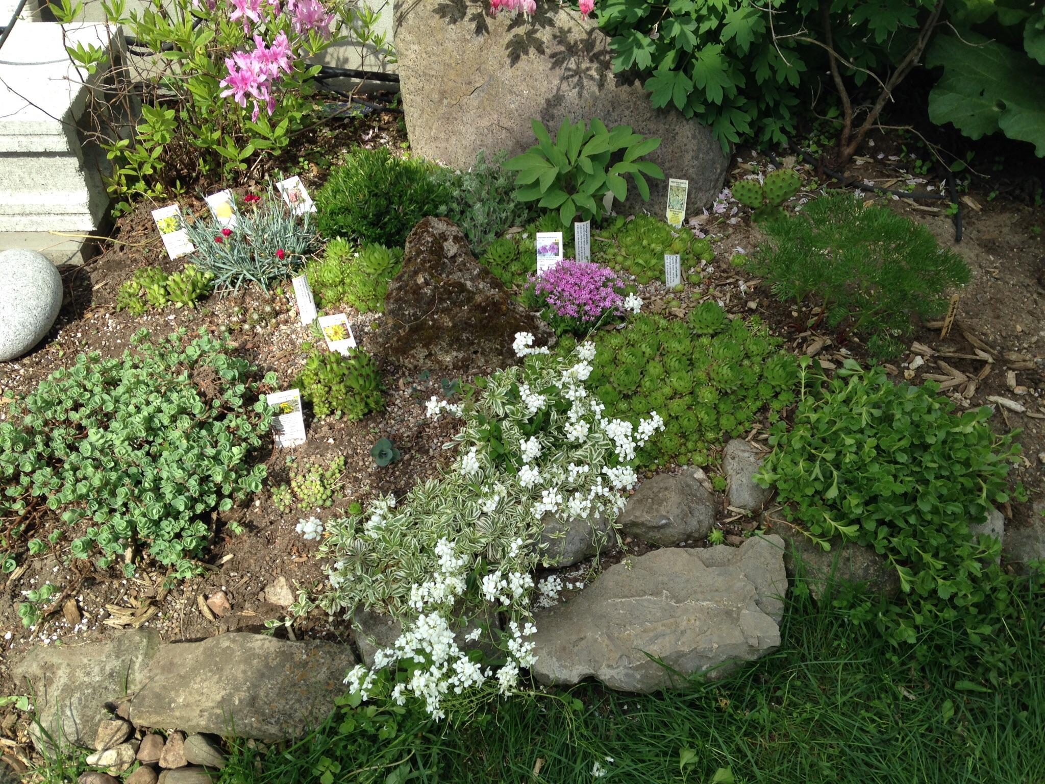 I wet my plants growing crazy in kemptville ontario for Gardening zones ontario
